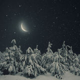 Beautiful winter nature night landscape. Pine trees covered snow Stock Photo