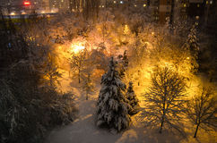 Beautiful  winter night in a park. Beautiful  winter night in a  city  park Royalty Free Stock Photos