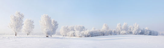 Beautiful winter panorama Royalty Free Stock Photos