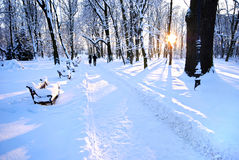 Beautiful winter park Stock Photography