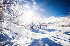 Beautiful Winter park Royalty Free Stock Photo