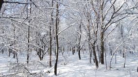 Beautiful winter park with different trees Stock Images