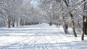 Beautiful winter park with different trees Stock Photos
