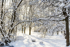 Beautiful Winter park landscape from Sofia,Bulgaria Royalty Free Stock Image