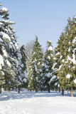 Beautiful Winter park landscape from Sofia,Bulgaria Royalty Free Stock Photography