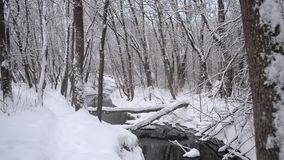 Beautiful Winter Park, spring flow from the melting snow, the river in the winter forest, trees covered with snow. stock video