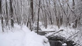 Beautiful Winter Park, spring flow from the melting snow, the river in the winter forest, trees covered with snow. stock video footage