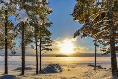 Beautiful winter picture of a lake with pine trees in the foregr Stock Photos