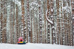 Beautiful winter pine forest. trees in snow. child goes from the mountain on a tube stock photo