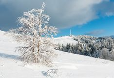 Winter hoar frosting trees,  tower and snowdrifts Carpathian mo. Beautiful winter rime frosting trees, communication tower and snowdrifts on mountain top on blue Royalty Free Stock Photo