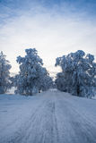 Beautiful winter road. Beautiful winter landscape with a narrow road with trees on both sides Royalty Free Stock Photos
