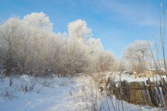 Beautiful winter rural landscape Royalty Free Stock Images