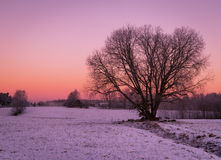 Free Beautiful Winter Rural Landscape With Clear Sky Stock Photo - 60401180