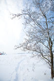 Beautiful winter scene Royalty Free Stock Images