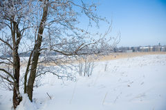 Beautiful winter scene Royalty Free Stock Image