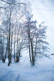 Beautiful winter scene Stock Photos