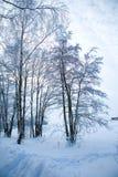 Beautiful winter scene Stock Photos