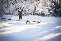 Beautiful winter scene Royalty Free Stock Photography