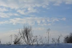 Beautiful winter scene with dry herbs on the background of sky stock images