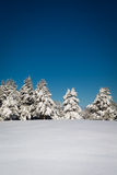 Beautiful winter scene with forest and fresh snow Royalty Free Stock Photography