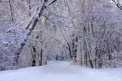 Beautiful Winter Scene with Hoarfrost after Snowfall royalty free stock image