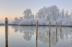 Beautiful winter scene in The Netherlands. Beautiful winter scene in the Biesbosch, The Netherlands. All foliage was covered in  fine ice crystals, which lasted Royalty Free Stock Image
