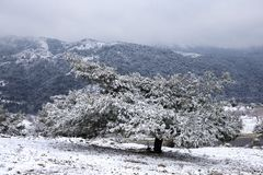 Beautiful Winter Scene Stock Image