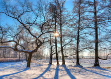 Beautiful winter scenery. In the winter the landscapes are very beautiful when the sun is there Royalty Free Stock Photo