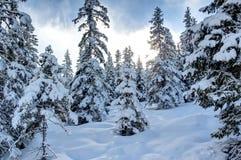 Beautiful Winter Scenery. Royalty Free Stock Photo