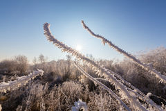 Beautiful winter scenery with trees covered by frost, along frozen river Stock Photo