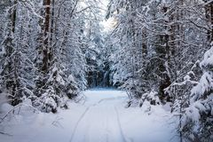 Beautiful Winter Scenery With Forest Full Of Trees Covered Snow Stock Image