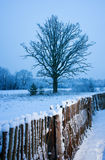 Beautiful winter scenic Royalty Free Stock Photo