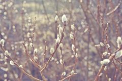 Beautiful winter season specific photograph. Small branches and white flowers. Lovely lights and colors. Winter environment. Detai. Beautiful winter season Royalty Free Stock Photo