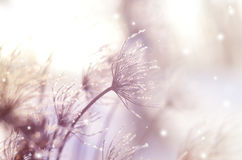 Beautiful winter seasonal background with dry plants against sparkling bokeh. Lights stock photo