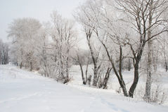 Beautiful winter. Snow-covered trees on the banks of the river Stock Photography