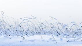 Beautiful winter snow field Royalty Free Stock Photography