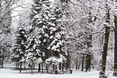 Beautiful winter snow Royalty Free Stock Photography