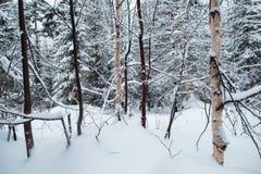 Beautiful winter snowy landscape in the mountainous terrain. Royalty Free Stock Image