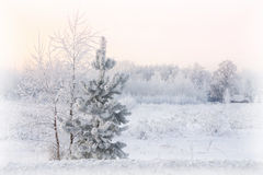 Beautiful winter snowy landscape with tree and house selective focus Stock Photo