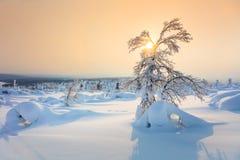 Beautiful Winter Sundown - Northern Nature Landscape Royalty Free Stock Image