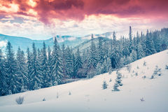 Beautiful winter sunrise in the Carpathian mountains. Stock Images