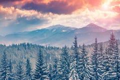 Beautiful winter sunrise in the Carpathian mountains. Stock Image
