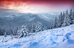 Beautiful winter sunrise in the Carpathian mountains. Royalty Free Stock Images
