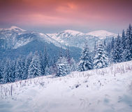 Beautiful winter sunrise in the Carpathian mountains. Stock Photography