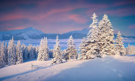 Beautiful winter sunrise in the foggy mountains. Royalty Free Stock Image