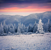 Beautiful winter sunrise in the mountain forest. Royalty Free Stock Photos
