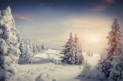 Beautiful winter sunrise in the mountain forest Stock Photo