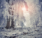 Beautiful winter sunrise in the mountain forest. Stock Images