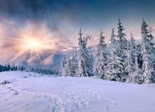Beautiful winter sunrise in mountains Stock Photos