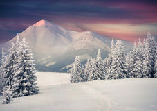 Beautiful winter sunrise in mountains. Stock Images